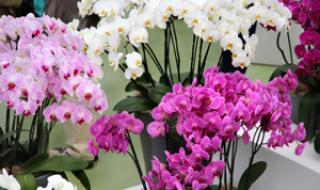 Plantes et fleurs au bureau avec MIGROS PRO