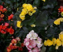 Fleurs et plantes avec MIGROS PRO